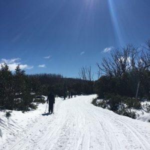 Adventure Plus team skiing along ski trail